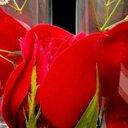أميرة الوردً ..  (@007_see) Twitter