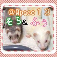 スプラトゥーンプレイヤー Qpaco13 アイコン