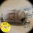 Mezashi_conf