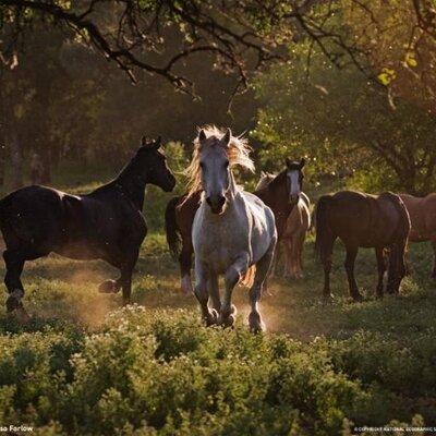 Gallop | Social Profile