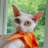 Cats Seeking Answers | Social Profile