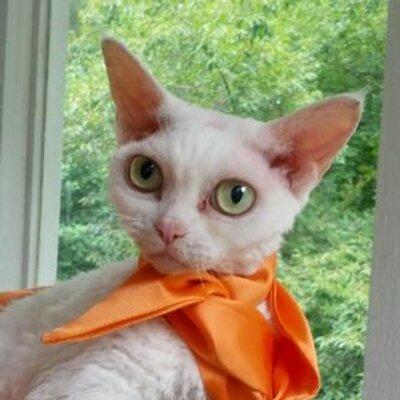 Cats Seeking Answers   Social Profile