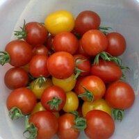 Tomato(トマトママ) | Social Profile