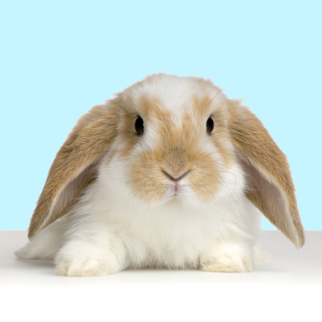 Bunny Buddhism Social Profile