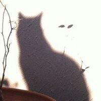 naoko watanabe | Social Profile