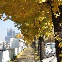 Ren Kikuchi | Social Profile