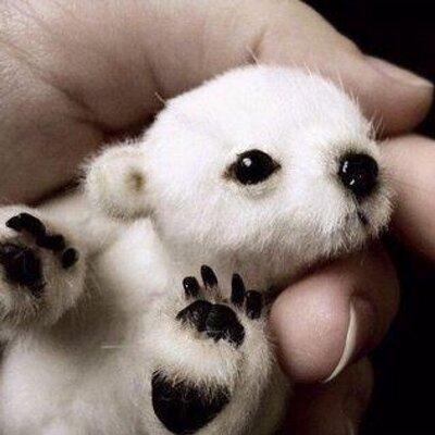 Animal Baby Pix