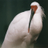 The profile image of toki_N_nippon