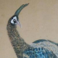 鳥 | Social Profile
