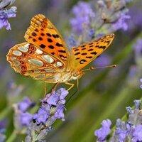 Kami i♥butterflies | Social Profile