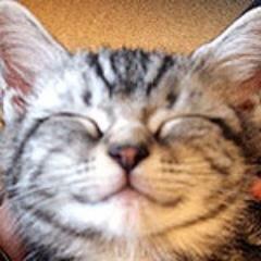 笑い猫 Social Profile