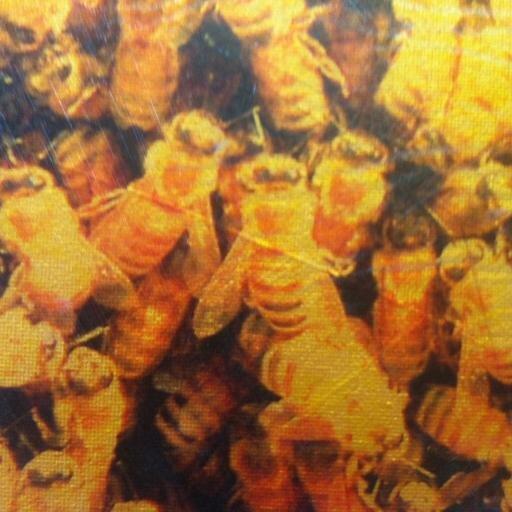 Melibee Global Swarm
