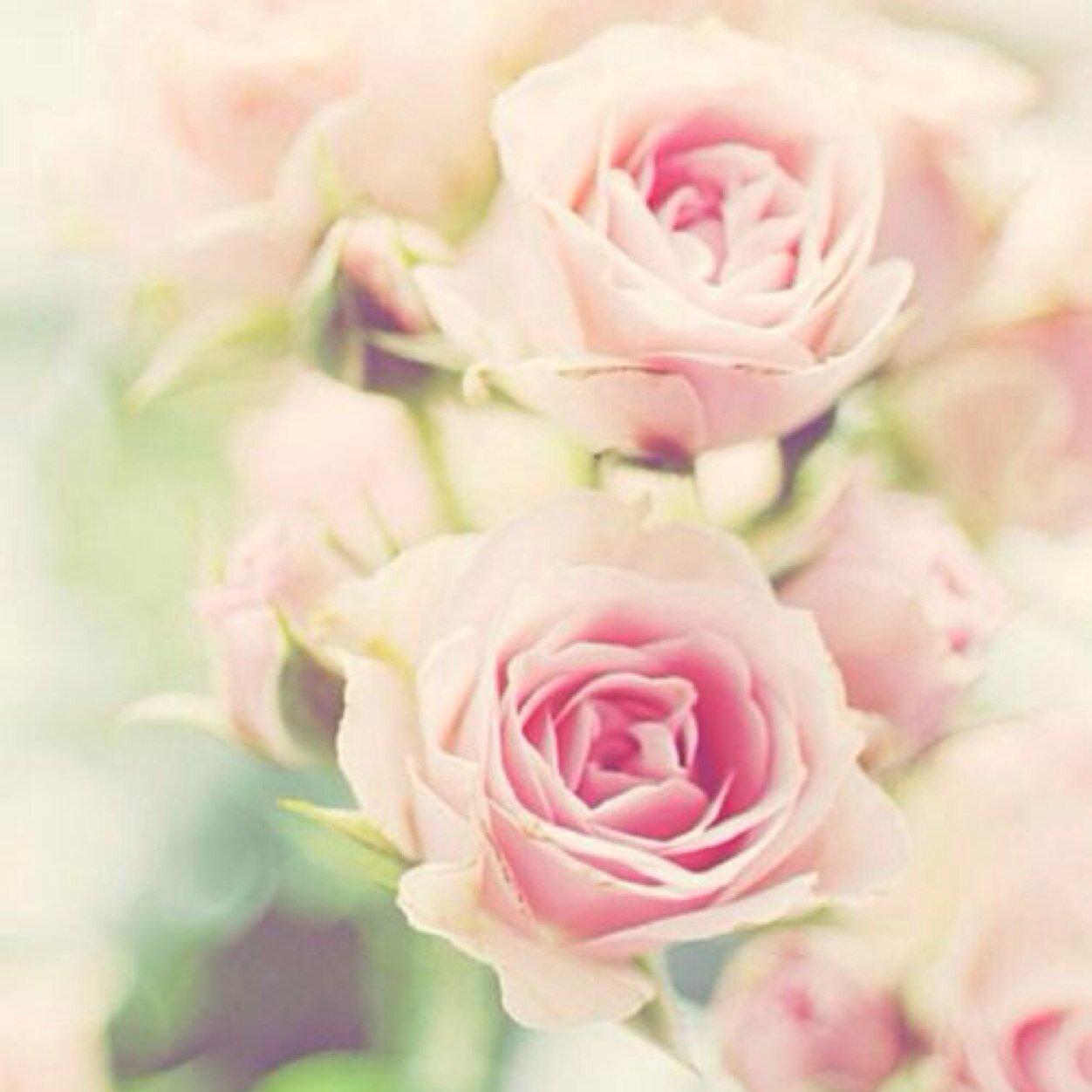 Фото для вк на аву цветы