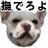 @inuichi7