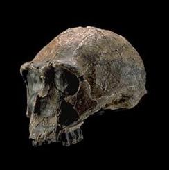 Human Origins at SI Social Profile