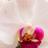 <a href='https://twitter.com/_BeautyTipsDiva' target='_blank'>@_BeautyTipsDiva</a>