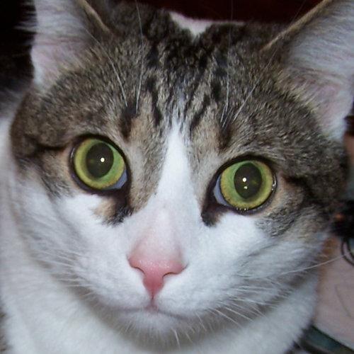 Boris Kitty Social Profile