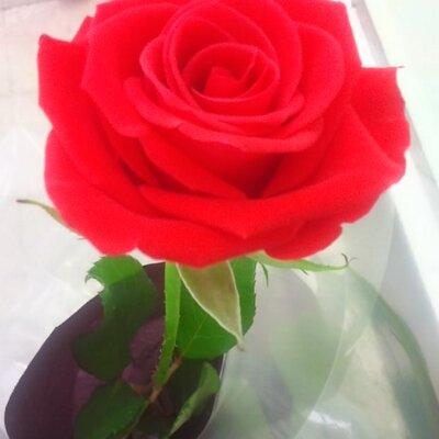 *TAKA*(silver-rose)   Social Profile