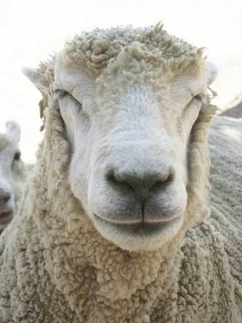 東の羊(マカティ住み) Social Profile