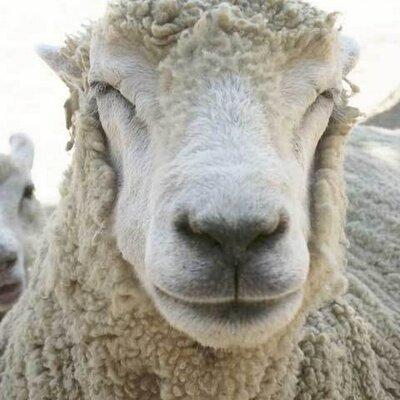 東の羊(マカティ住み) | Social Profile