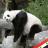 PandaKinges profile