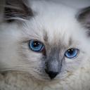 ネコパンチ(Cat pawing)