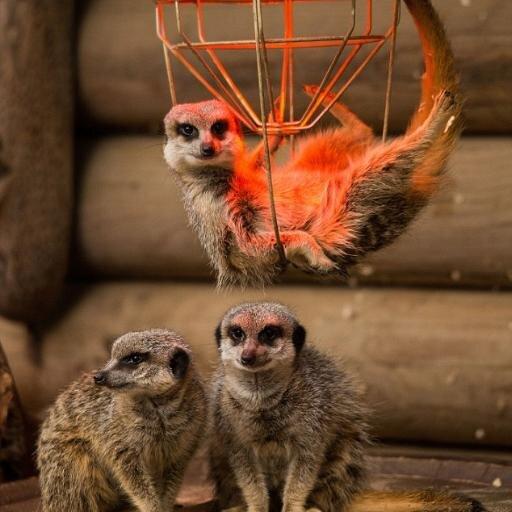 Meerkat Social Profile