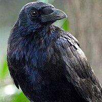 RavenVal | Social Profile