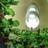 @DSR_hydroponics