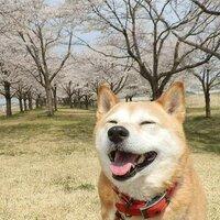 kamitori 緑と平和の地球が一番! | Social Profile