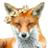 @Festive_Fox