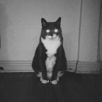 nuzz | Social Profile