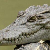 crocodile jeers | Social Profile