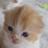 The profile image of kaori06798808