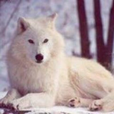 CrystalwolfLady | Social Profile