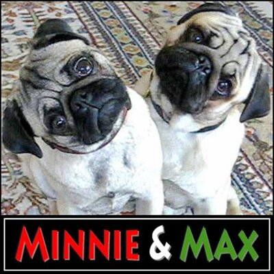 Minnie & Max Pugs | Social Profile