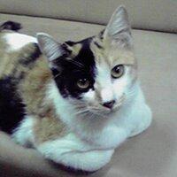 harua_ri | Social Profile