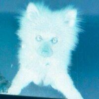 犬(凍結されました) | Social Profile