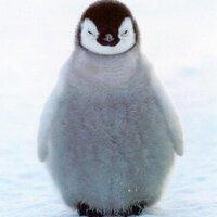Random Penguin | Social Profile