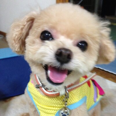 犬好きのひぃ | Social Profile