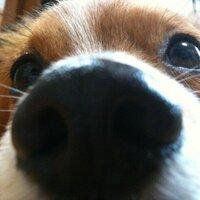 なおぷってょ | Social Profile
