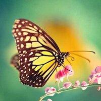 Deeasty AyanDa S. | Social Profile