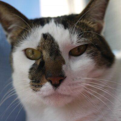 おか 廃屋で保護猫お世話中 | Social Profile