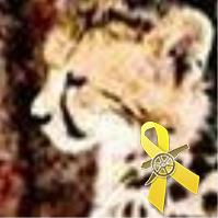 Wildcat | Social Profile