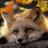foxtail151
