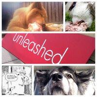 @unleasheddogyyc