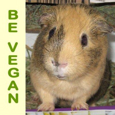 Vegan Wheekers | Social Profile