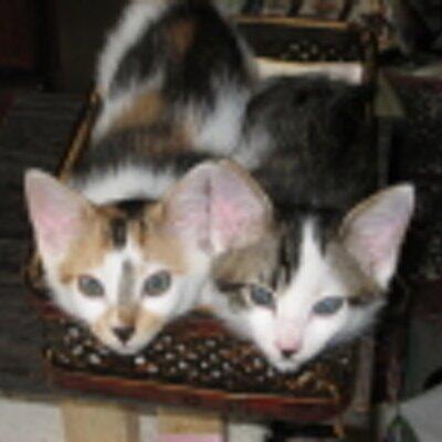 猫の親@政治は生活 | Social Profile