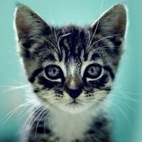 catsnkittys
