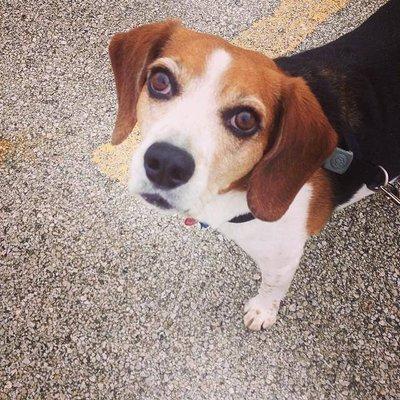 Beagle Dad | Social Profile